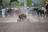 UM College Rodeo Slack Steer Wrestling May 9 2014
